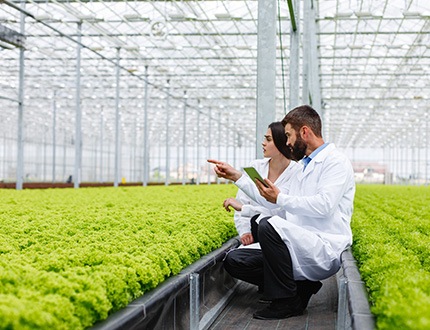 Why you should consider a career in agrifoods